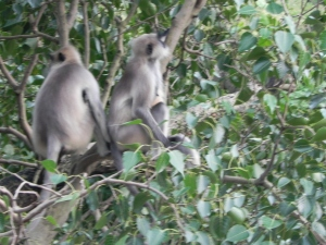 Monkeys having a great time