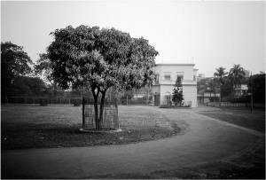 7 Old House-Mango Tree ppt