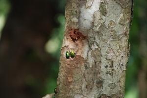 coorful bugs on trees - Amra Kunj